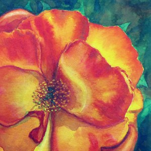Orange Rose – Image © Susan Bartel. All Rights Reserved.