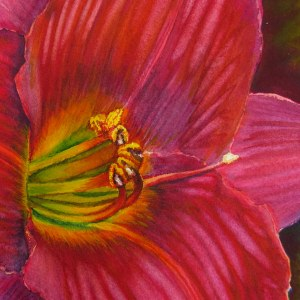 Red Daylily – Image © Susan Bartel. All Rights Reserved.