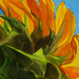 Sunflower – Image © Susan Bartel. All Rights Reserved.