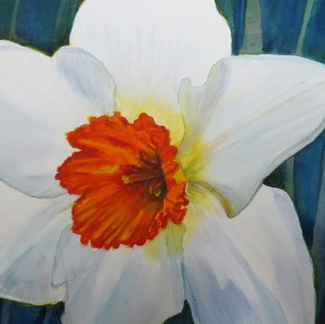 Daffodil - Image © Susan Bartel. All Rights Reserved.
