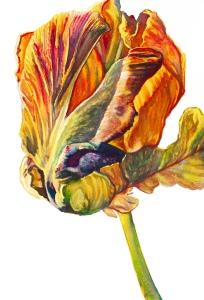 ParrotTulip
